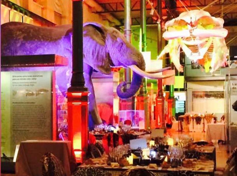 Cena Museo Ciencias Naturales Evento Empresarial